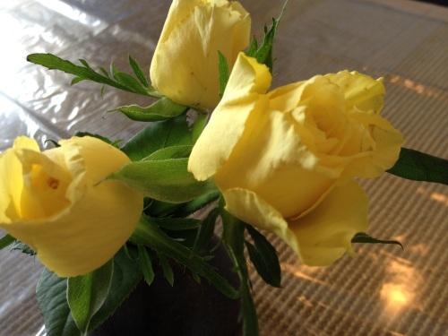 黄色いバラが涼しげです