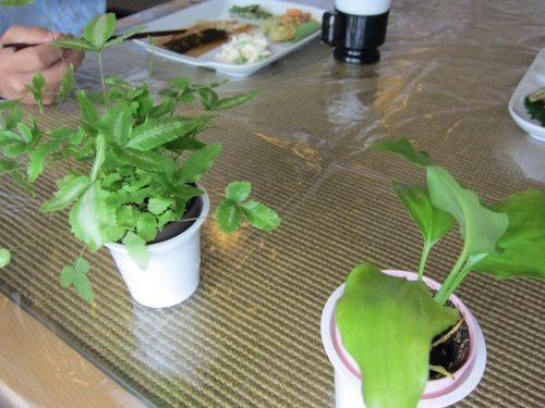 植物もすくすく。元気が出ます!